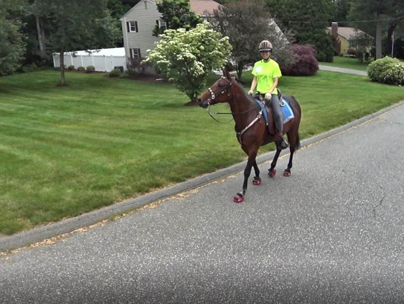 Standardbred horse gait training under saddle
